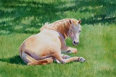 white_pony_horse_watercolor_painting_82af9326595641aec7c778fa5f976266.jpg (475×318)