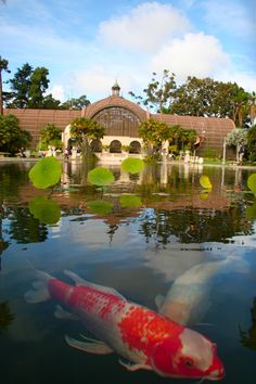 Balboa Park, San Diego  -- really nice pic of one of my very favorite spots in SD, the Botanical House.