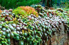 suculentas y cactus2