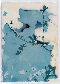 Cyanotype Photographic print, Wandering Vine, blueprint, sunprint, nature, botanical by PigeonsOnTheRoof on Etsy