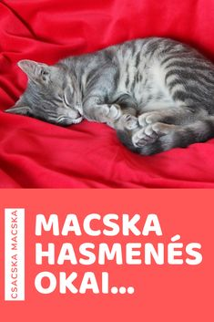 Macska | Cica | Macskák | Cicák | Hasmenés | Macska betegség | Cica betegség Cats, Animals, Gatos, Animales, Animaux, Kitty, Cat, Cats And Kittens, Animal