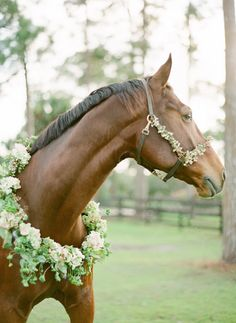 .In Memory of those race horses sent to slaughter.