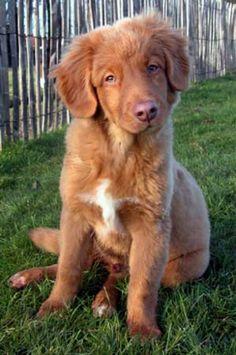 Dog Grooming Programs In Nova Scotia