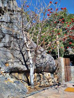 Arvore florando no pé do Morro da Gruta do Senhor Bom jesus,Bom Jesus da Lapa - Bahia