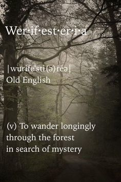Looking for the words in the woods. Unusual Words, Unique Words, The Words, Books And Tea, Words Quotes, Sayings, Time Quotes, Wisdom Quotes, Quotes Quotes