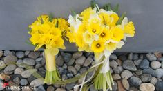 See our DIY tutorial to create easy daffodil bouquets for both bride and bridesmaids. It's simple to create a beautiful bouquet with these spring blooms! Spring Wedding Flowers, Spring Blooms, Daffodil Bouquet, Spring Wedding Inspiration, Brides And Bridesmaids, Daffodils, Floral Arrangements, Wedding Planning, Wedding Day