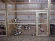 http://www.poultryhelp.com/lakpennite2.jpg