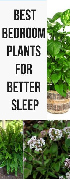 If you're having sleepless nights, these are the best plants for your bedroom. They will help with your insomnia!