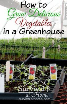 How to Grow Vegetables in a Greenhouse Learn how to grow vegetables in a greenhouse, and you will be able to enjoy fresh produce year-round — even in the harsh, bitter cold of the winter months. #Gardening, #Greenhouse, #Vegetables