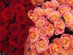 Columbia road Flower Market - Londra