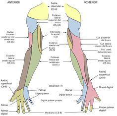 Un dermatoma es el área de la piel inervada por una raíz o nervio dorsal de la médula espinal. Los nervios cutáneos son los que llegan a la piel, recogiendo la sensibilidad de ésta. Cada nervio cutáneo se distribuye en una cierta zona de piel, llamada dermatoma.