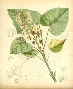 v.108=ser.3:v.38 (1882) [no.6600-6664] - Curtis's botanical magazine. - Biodiversity Heritage Library