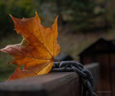 Autumn - SAMSUNG CSC