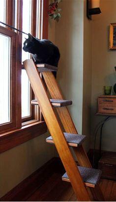 7. Eller sätt fram en stege som katten kan spana ifrån