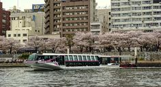 Taking the 40 minute Tokyo river cruise on the Sumida river from Hamarikyu gardens near Tsukiji to Asakasa will give a different perspective on the city