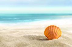 Картинки Природа, раковины, песок, пляж, пляж, лето, море, солнце, песок на рабочий стол » Лето