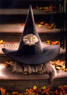 Funny Cats Costumes Happy Halloween New Ideas Animals And Pets, Baby Animals, Funny Animals, Cute Animals, I Love Cats, Crazy Cats, Cute Cats, Fete Halloween, Halloween Cat