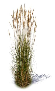 A tuft of tall grass - Miniature Garden Landscape Sketch, Landscape Elements, Landscape Architecture, Landscape Design, Garden Design, Photoshop Essentials, Trees Top View, Architectural Plants, Desktop Background Pictures