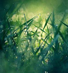 GREEN ☘