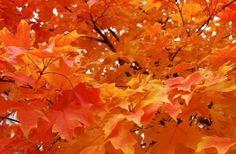 The fall by margarett