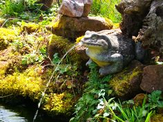 Frosch als Springbrunnen Animals, Water Fountains, Lawn And Garden, Animales, Animaux, Animal, Animais