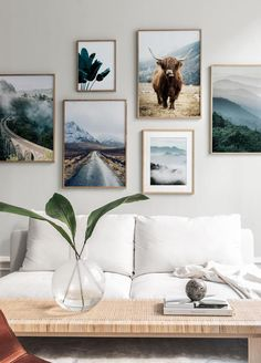 Highland Cow Poster - Murales Pared Exterior - My Dunsire Poster Mural, Poster Wall, Poster Prints, Desenio Posters, Wall Collage, Wall Art, Cow Pictures, Poster Store, Nature Posters