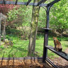 Wohnideen Minimalistischem Pergola | 13 Best Diy Garden Pergola Cat Enclosure Images Catio Diy Pergola