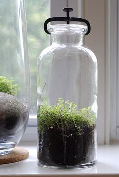 Terrarium in vintage scientific glass -- good for travelers; they can withstand absent owners!