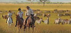 Yes I want to ride around with Zebras! Singita Serengeti House   Singita