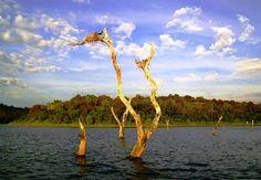 Amazing Sunken Forest: Periyar Lake with Wildlife Scenery