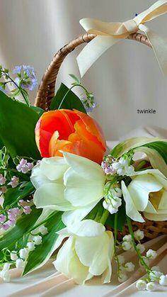 Photo Female Profile, All Flowers, Ikebana, Bellisima, Veronica, Make It Yourself, Youtube, Dessert, Facebook