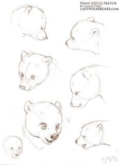 sketching bear cubs | Daily Animal Sketch – Arctic Fox and Polar Bears