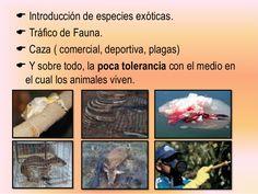  Introducción de especies exóticas.  Tráfico de Fauna.  Caza ( comercial…