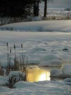 Home, Fashion, Books, Nature, Art and Food. I do not own any of the pictures posted. I Love Snow, I Love Winter, Winter Magic, Winter's Tale, Winter Scenery, Snow Scenes, All Nature, Winter Beauty, Winter Pictures