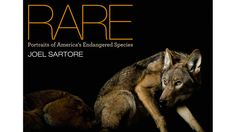 Earth's biodiversity is vanishing at an alarming rate.  This video from National Geographic photographer Joel Sartore shows what we stand to lose.  More information is available in his forthcoming book, RARE: Portraits of America's Endangered Species.