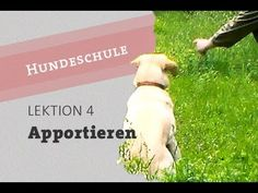 Hund Impulskontrolle Apportieren beibringen Teil 1 - Apport Disziplin Bl... Pets, Pet Dogs, Dog Cat, King Charles Spaniel, Cavalier King Charles, Dog Games, Beagle Dog, Dog Love, Dog Training