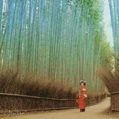 Фото @alexchekaev  #утро #Арасияма #гейша #гейши #таю #бамбук #бамбуковаяроща #Киото #Япония  Авторские путешествия экскурсии организация съемок фотосессий и фототуров по всей Японии www.midokoro.com  Приглашаем присоединиться к нашей октябрьской фотоэкспедиции в Японию программа: www.october.midokoro.com