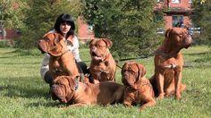 sociedadedosanimais.com.br/pesquise-e-conheça-um-pouco-sobre-os-animais: cães