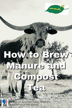 Brew Manure and Compost Tea / PBS-TV's Garden Rx starring Loren Nancarrow shows you how to brew up a batch of manure and compost tea for your garden.