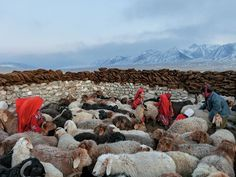 See a photo of Kyrgyz nomad girls herding sheep in the Little Pamir Valley in Afghanistan by Matthieu Paley, from National Geographic. Afghanistan Culture, Pakistan, Central Asia, National Geographic Photos, Countries Of The World, Nature Pictures, Natural Wonders, Places To See, Sheep