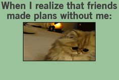 When I realize that friends made plans without me funny cute animals cat lol kitten gif kitty