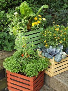 container veggie gardening 2012-gardening-ideas