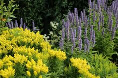 10 Perennials Every Garden Should Have Perennials are in full summer swing colouring beds and borders; they bring both vibrant and subtle hues to the lower layer of the planting picture. We love our perennials because most grow quickly, spread from small plants to larger clumps, and flower after a...