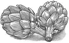 vintage artichoke - Google Search