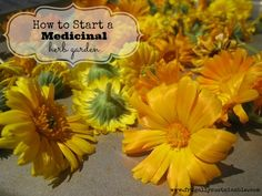 How to Start a Medicinal Herb Garden