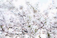 Lets Talk // Spring Blossoms — Treasures & Travels