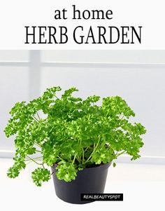 Home Garden – 8 Herbs You Can Grow at home