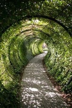 A tunnel in the back yard! This would be fun!!!