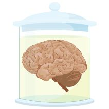 The Neurocritic: Independent Neuroblogs as part of the science blogging ecosystem