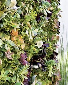 Succulent Wall Garden... but only if he has a green thumb, since I don't.